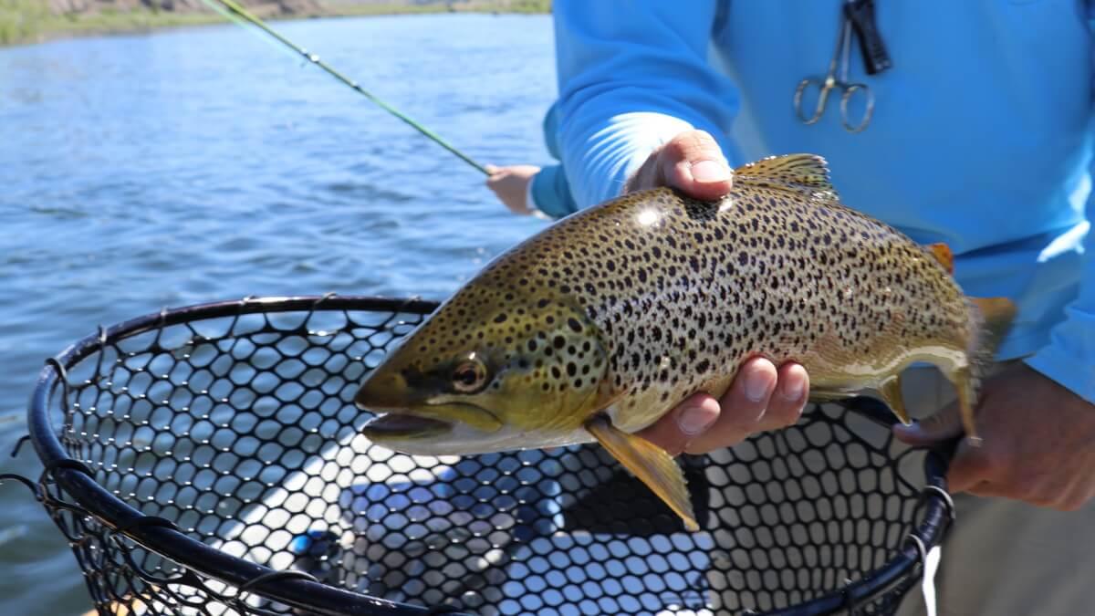 Att fiska öring